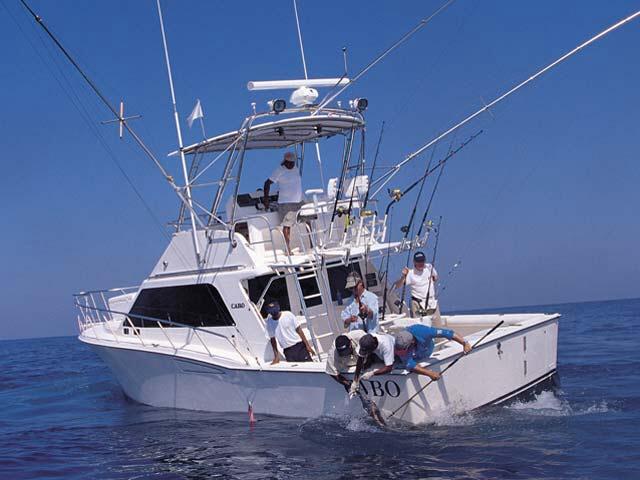Tag cabo sportfishing charter boat yacht fleets cabo for Cabo fishing charters