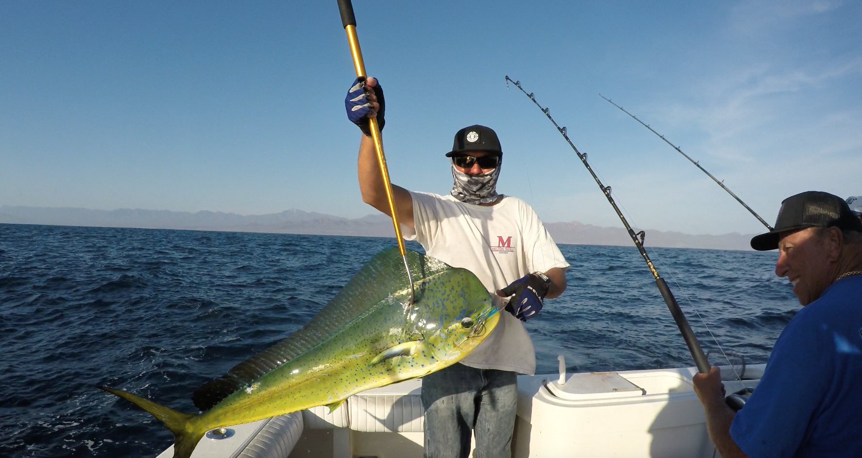 sport fishing gallery tag cabo sportfishing