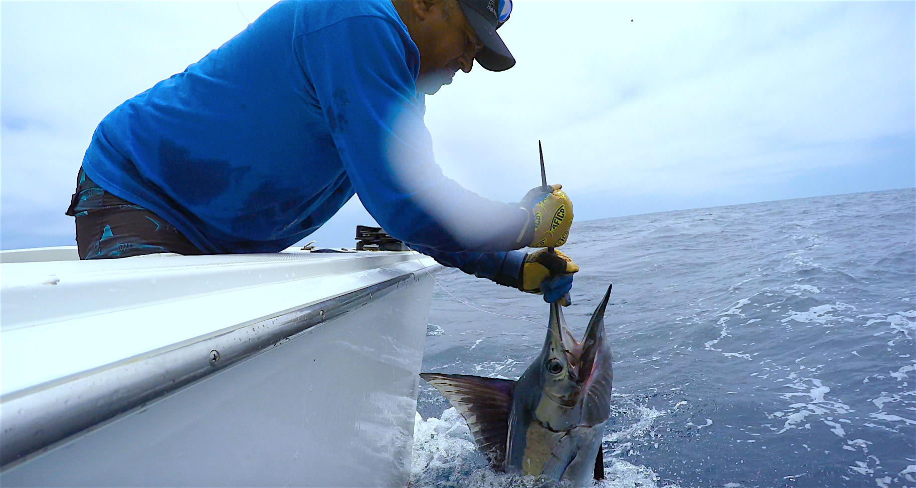 Sport fishing gallery tag cabo sportfishing for Cabo fishing charters