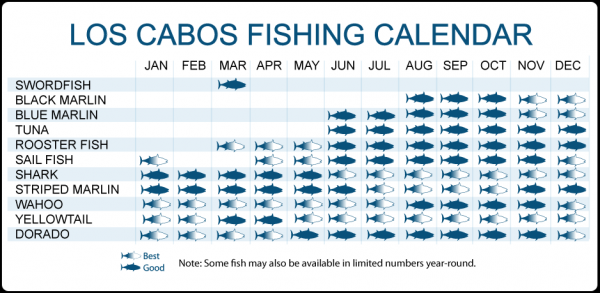 Cabo sportfishing rentals cabo luxury yacht charters for Cabo fishing seasons