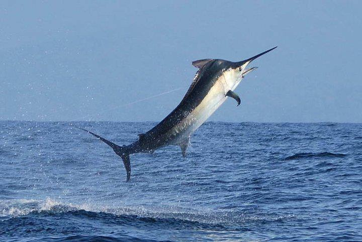 Tag Cabo Sportfishing Book Your Cabo Fishing Charter
