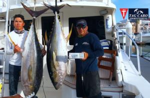 Yellowfin tuna Cabo fishing reports
