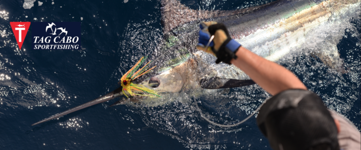 Cabo fishing report August 8th 2017/ Cabo fishing reports