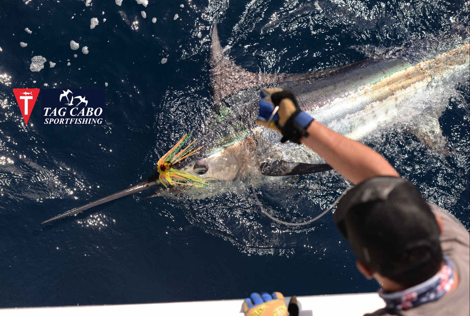 Picante fishing charters cabo for Cabo fishing charters