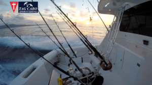 Cabo fishing reports August 2017