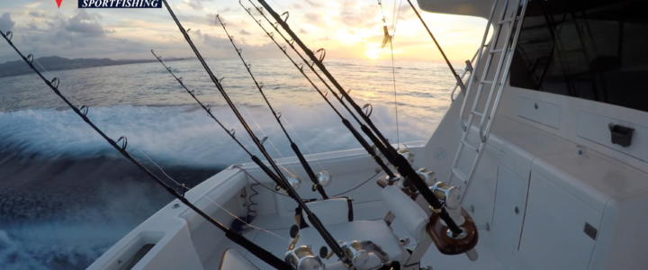 Cabo fishing report/ Cabo fishing reports August 16th 2017
