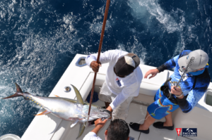deep sea fishing in Cabo, Cabo yacht charters, Cabo sportfishing reports, Cabo fishing reports, Cabo sportfishing rentals, Cabo sportfishing charters, Gordo bank fishing,cabo fishing report, deep sea fishing,