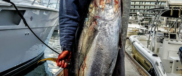 Cabo fishing report February 27th 2018