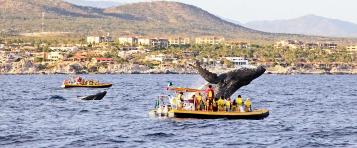 Best Fishing Spots in Cabo San Lucas —Revealed!