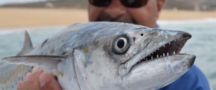 Cabo fishing report February 2018