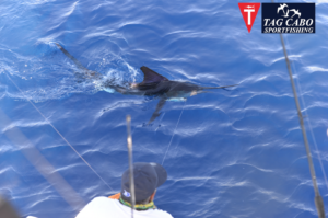 Fishing for striped marlin in Cabo San lucas